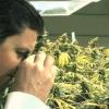 Le Supplément de Canal+ / Cannabis in Colorado