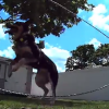 Sony ActionCam Viral Series – Double Dutch Dog